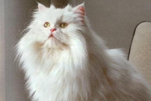 Allergia al gatto il modo migliore per gestirla l for Il modo migliore per costruire una casa
