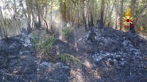 A fuoco un ettaro di bosco