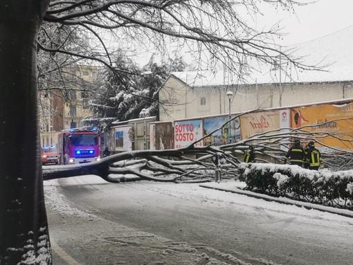 Crolla un albero in corso Italia - FOTO