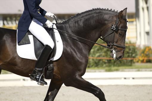 Come scegliere i giusti stivali da equitazione lunghi?