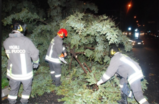 Temporali e vento forte nella Bassa: abbattuti alberi e pali telefonici; danneggiate alcune auto