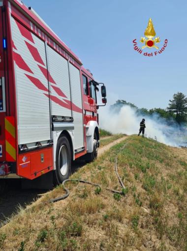 Sterpaglie in fiamme lungo la provinciale 230