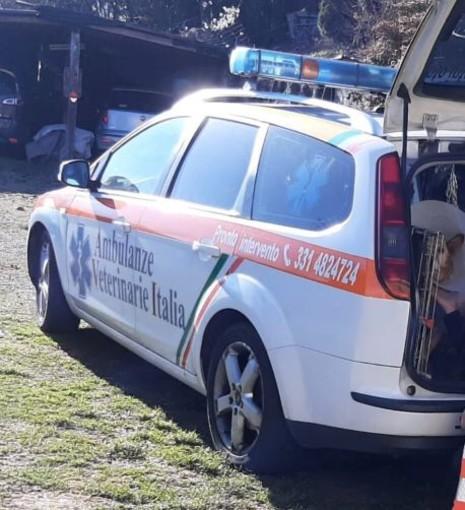 Un'ambulanza sempre a disposizione per le emergenze veterinarie