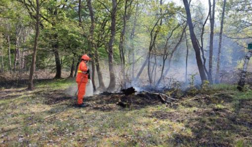 Incendio boschivo divampa in Baraggia, quattro focolai spenti. Si procede con la bonifica FOTO