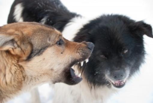 Interviene nella zuffa tra cani: ferito un 64enne