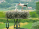 Tra le risaie vercellesi una nuova casa per le cicogne