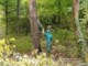 Attaccati dai calabroni: padre e figlio ricoverati d'urgenza