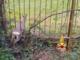 Cappuccini: salvataggio di un capriolo incastrato in un cancello