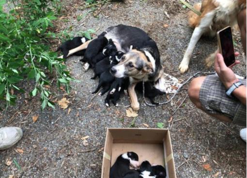 Cuccioli e mamma trovati su ciglio della strada