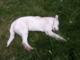 Disel, il cucciolo ucciso in Valle Elvo