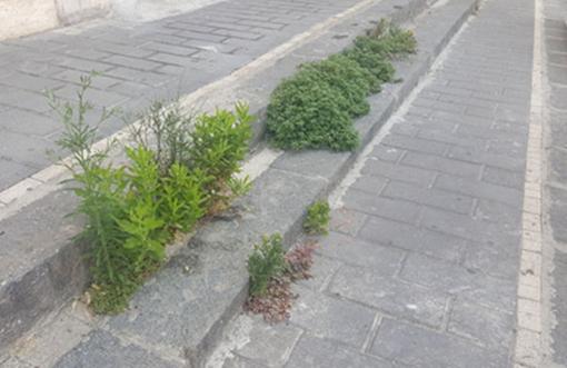 Metodi naturali contro le erbacce: Lega, FdI e Cambiamo! bocciano la richiesta della minoranza