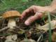 """Niente tesserino e funghi nel sacchetto di plastica: multato un """"fungiat"""""""