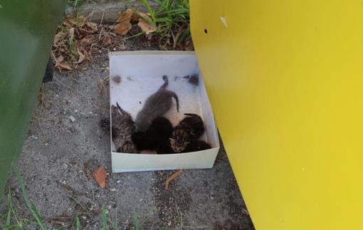 La foto dei gattini pubblicata dalle volontarie di Baffi & Code