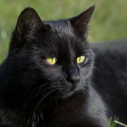 """""""Ma davvero credete che i gatti neri portino iella?"""""""