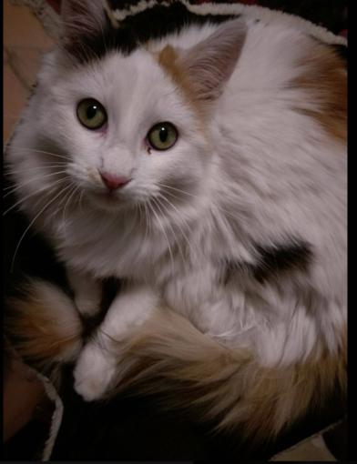 Una bella foto della gattina Kylie