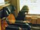 Molesta le ragazze sul treno da Santhià: denunciato