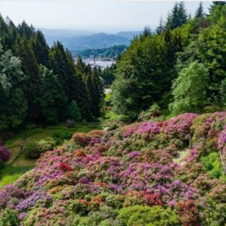 L'Oasi Zegna riparte dalle splendide fioriture spontanee e della Conca dei Rododendri FOTO