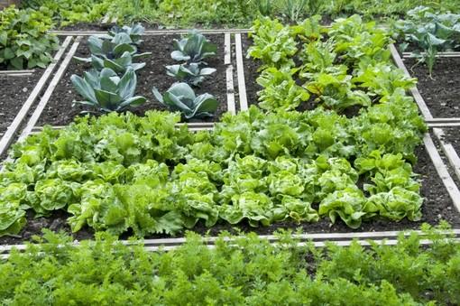 Anche in zona arancione ok agli spostamenti per coltivare l'orto
