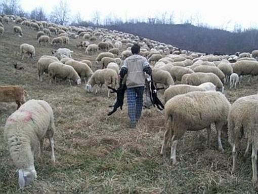 Ami i lupi? Adotta un pastore