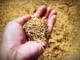 Ente Risi: «Ripristinare i dazi sulle importazioni di riso dalla Birmania»