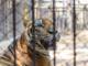 Sindaco sotto attacco dell'associazione animalista