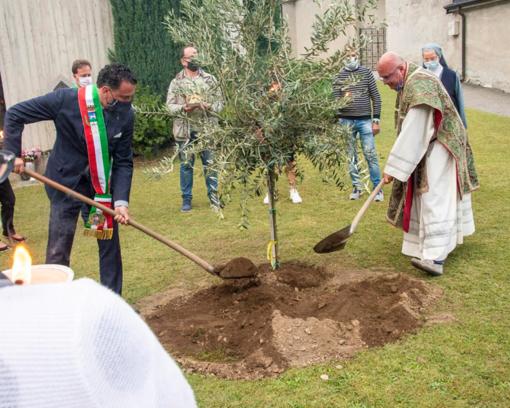 Il sindaco Botta e don Collarini piantano l'ulivo